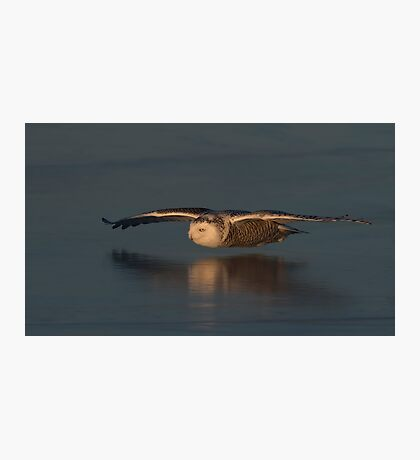 Snowy Owl on Ice in Canada Photographic Print
