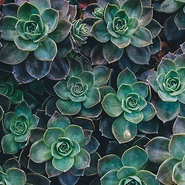 Succulents by FloatingGoat