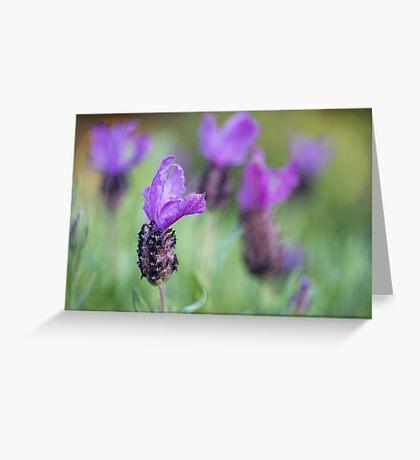 Spanish Lavender Greeting Card