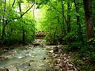 Lost Valley Bridge,  Buffalo National Wilderness  by NatureGreeting Cards ©ccwri