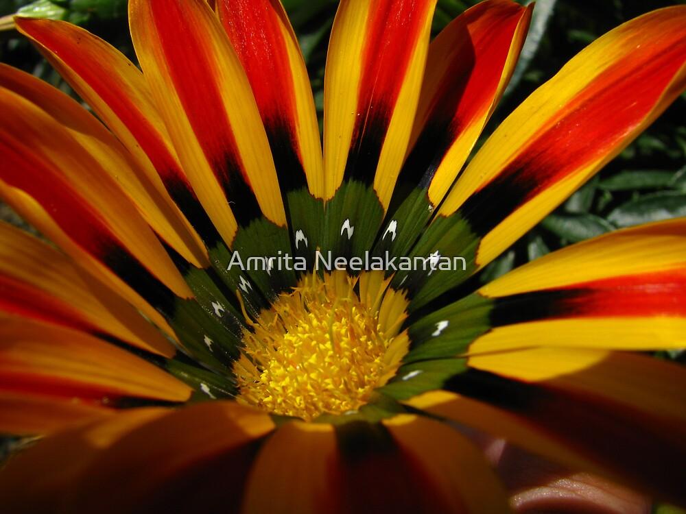 Flower Fire by Amrita Neelakantan
