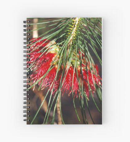 Calathomnus in Red Spiral Notebook