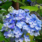 Flowers CB by Angelsgreen