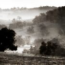 morning mist by alistair mcbride