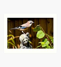 The Stunning Jay......... Art Print