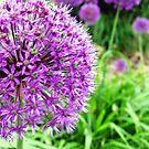 Purple-on-a-Stick by Catherine Mardix
