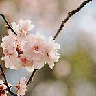 Firey Blossom by Karen E Camilleri