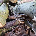 Turkey Tail on Fallen Tree Trunk by EmilyJaneArt