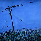 Rooks, Wires, Hedgerow (County Cork, Ireland) by eolai