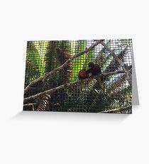 Birdy Liebe Grußkarte