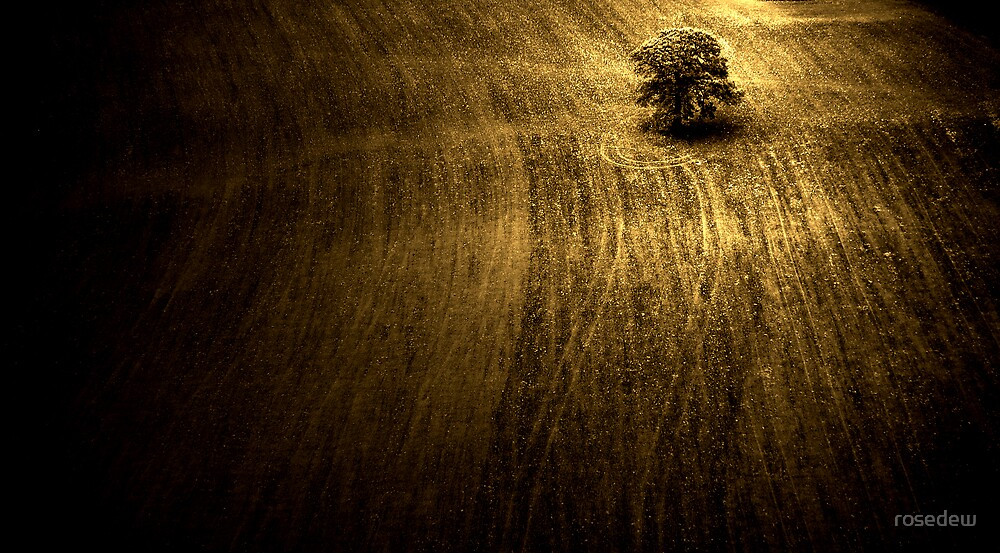 A Ploughed Field by ROSE DEWHURST