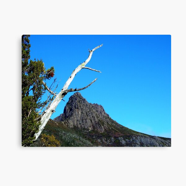 Up at Cradle Mountain Canvas Print