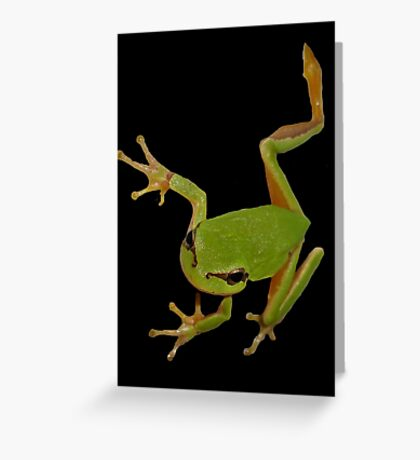 European Green Tree Frog Isolated Greeting Card