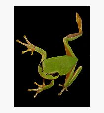 European Green Tree Frog Isolated Photographic Print