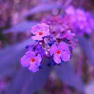 Purple Haze by Sukhwinder Flora