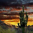 Saguaro Cactus by Valentina Gatewood