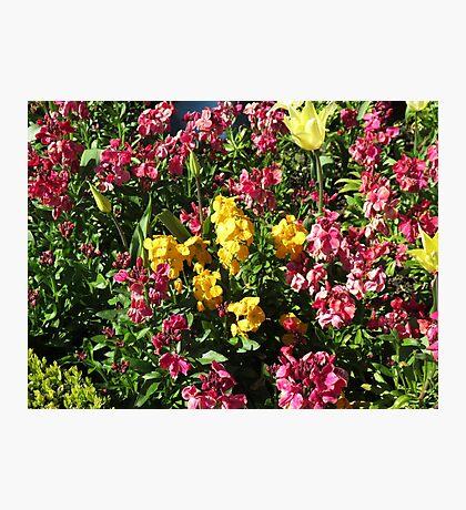 Flowerbed - Preston Temple Fotodruck