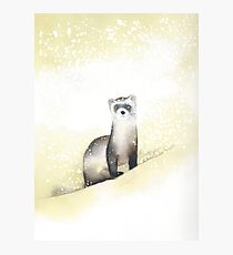 Ferret in the Snow Photographic Print