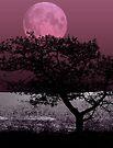 Moonlight by Nathalie Chaput