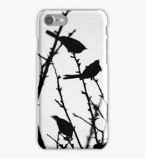 Wagtail Roost II iPhone Case/Skin