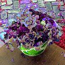 Colors by Linda Miller Gesualdo
