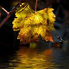 Amber Leaf Reflections by Elaine Teague