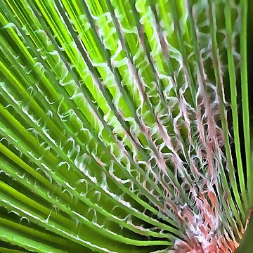 Palm Tree Tropical Leaf by taiche