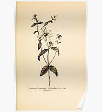 Harper's Guide to Wild Flowers 1912 Creevey, Caroline and Stickney, Alathea 077 Woodland Sunflower Poster