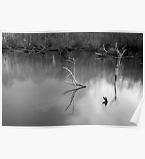 Dead Tree Branches, Fradley Pool  Poster