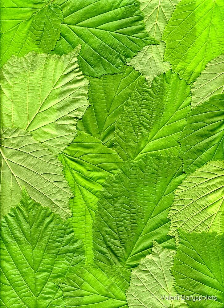leaves by Valerii Baryspolets