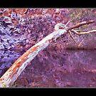 Redgum waterhole by Tony Middleton