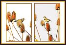 Fledgeling Goldfinch Collage by missmoneypenny