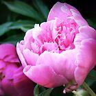 Perfectly Pink by Nadya Johnson