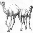 Couple of Camels by liljo