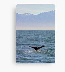sperm whale, Kaikoura Peninsula , New Zealand   Canvas Print