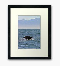 sperm whale, tail down, Kaikoura Peninsula , New Zealand   Framed Print