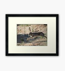 Jack the Rabbit Framed Print
