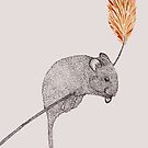 field mouse by samclaire