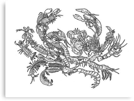 Lienzos Crustáceos Blanco Y Negro Evolución árbol De La Vida