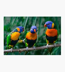 Red-Collared Lorikeet IV Photographic Print