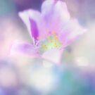 Fleur IV by Didi Bingham