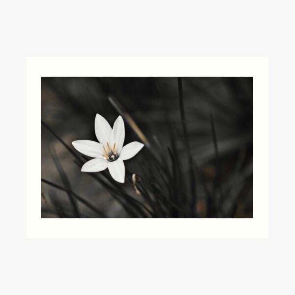 White on black flower Art Print