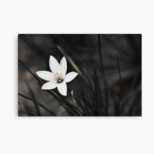 White on black flower Canvas Print