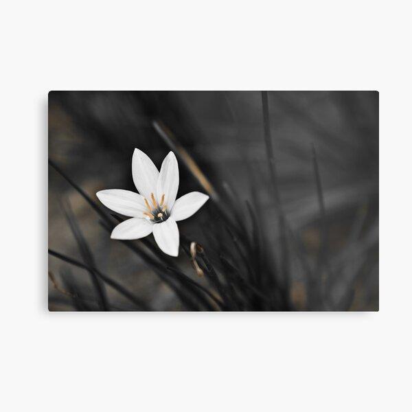 White on black flower Metal Print