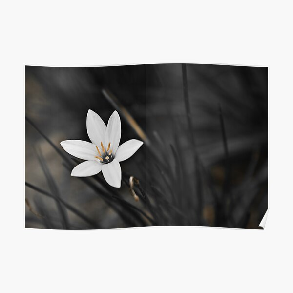 White on black flower Poster
