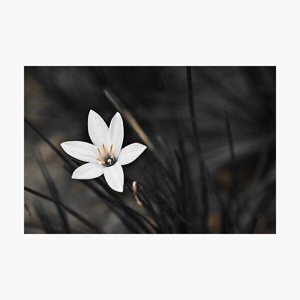 White on black flower Photographic Print