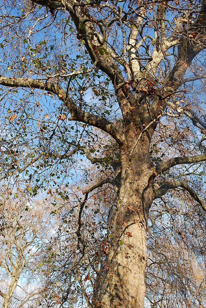 It's a tree by Geraldine Miller