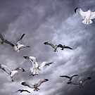 Sea Of Gulls by Gene Praag