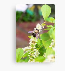 Big Bumble Metal Print