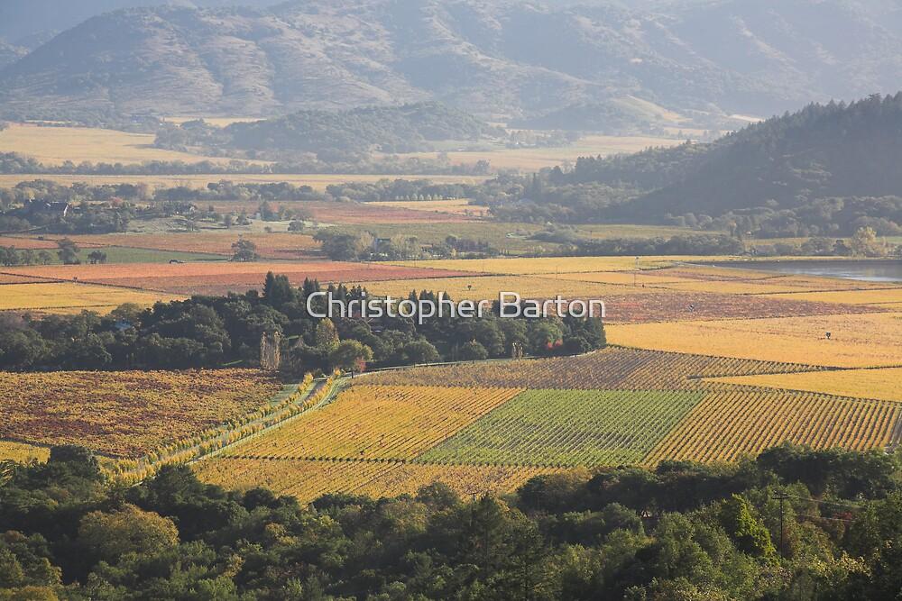 autumn 2, Napa Valley , California by Christopher Barton